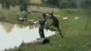 Το μοχθηρό καγκουρό που έριξε άνθρωπο στην λίμνη