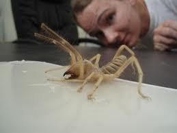 Τον δάγκωσε αράχνη και δείτε πως έγινε