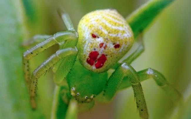 Απίστευτο! Αυτή είναι η πιο τρομακτική αράχνη