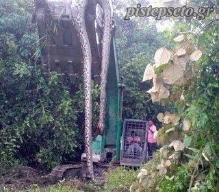 Αυτό είναι το μεγαλύτερο φίδι που έχετε δει μέχρι τώρα