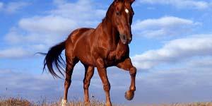 Το πρόβλημα με την σχέση του τον οδήγησε σε ερωτική επαφή με ένα άλογο