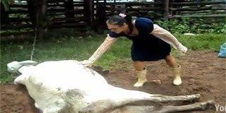 Πήγε να αγγίξει την αγελάδα την ώρα που γεννούσε και δείτε τι έπαθε