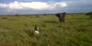 Video: Είδε ο ελέφαντας τον μεθυσμένο και φοβήθηκε
