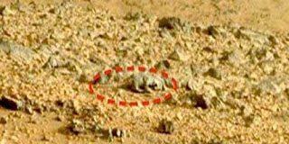 Ιάπωνας ανακάλυψε ύπαρξη ζωής στον Άρη (Photos)