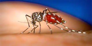 Η εποχή πλησιάζει και τα κουνούπια θα κάνουν την εμφάνιση τους – Πως να προστατευτείτε