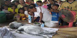 Σοκ: Στην Ταϊλάνδη βουβάλι γέννησε ένα ανθρωπόμορφο πλάσμα