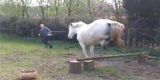 Το άγριο άλογο και η άτυχη εκπαιδεύτρια
