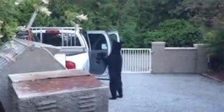 Η αρκούδα κλέφτης αυτοκινήτων