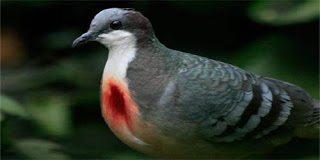 Αυτό είναι το είδος πτηνού που αιμορραγεί