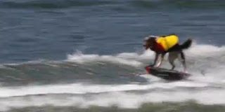 Ο σκύλος λάτρης των αθλημάτων