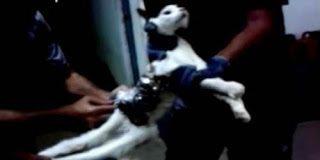 Βραζιλία: Συνελήφθη γάτα που προσπαθούσε να περάσει στην φυλακή κινητά