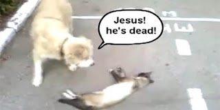 Ο απίστευτος γάτος που κορόιδεψε τον σκύλο (video)