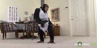 Τι μπορεί να κάνει μια μαϊμού για 1000 δολάρια