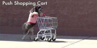Η σκυλίτσα που έχει εκπαιδευτεί να κάνει όλες τις δουλειές