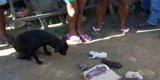 Σοκαριστικό – Σκύλος γέννησε άνθρωπο  (photos)