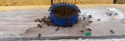 σιγά σιγά τα μυρμήγκια άρχισαν να συγκεντρώνονται