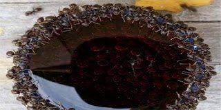 Η συμπεριφορά των μερμηγκιών όταν αυτά βρεθούν κοντά σε αναψυκτικό