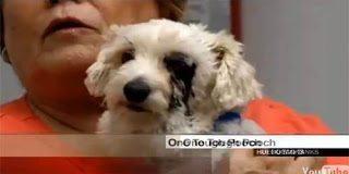 Video – Σκύλος έσωσε παιδάκι που πήγαινε να το δαγκώσει φίδι
