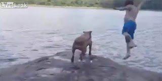 Σκύλος πέφτει κλαίγοντας στο νερό για να σώσει το αφεντικό του