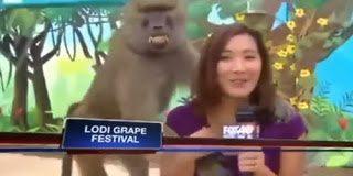 Ο έξυπνος μπαμπουίνος που παρενόχλησε την ρεπόρτερ