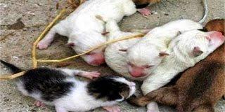 Αυτό και εάν είναι! Σκύλος γέννησε γάτα (pics)