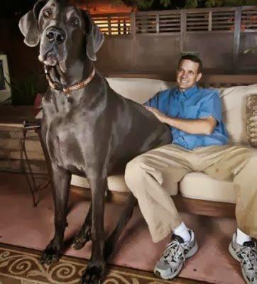 Αυτά είναι τα μεγαλύτερα ζώα 10