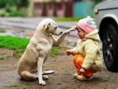 Σκύλοι, οι καλύτεροι φίλοι του ανθρώπου σε συγκινητικές στιγμές 4
