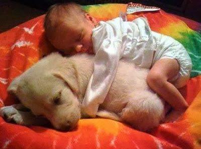 Σκύλοι, οι καλύτεροι φίλοι του ανθρώπου σε συγκινητικές στιγμές 5