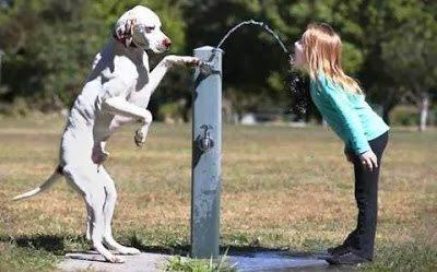 Σκύλοι, οι καλύτεροι φίλοι του ανθρώπου σε συγκινητικές στιγμές