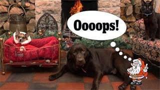 Η  πιο αποτυχημένη χριστουγεννιάτικη κάρτα που κάνει θραύση