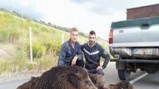 Δυο γουρούνια... και πέντε θύματα