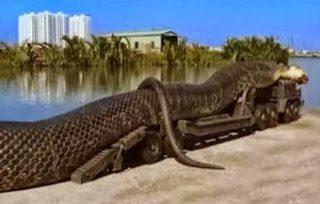 Όλη η αλήθεια για το γιγαντιαίο φίδι που βρέθηκε στην κόκκινη θάλασσα