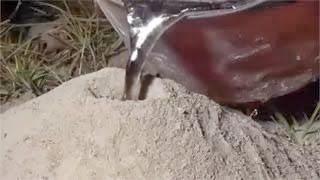 Δες τι θα γίνει εάν ρίξεις λιωμένο αλουμίνιο μέσα σε μυρμηγκοφωλιά