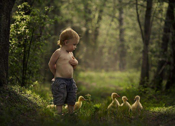 τα ζώα του αγροκτήματος-1