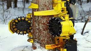 Πραγματικό Τέρας – Εξαφανίζει ολόκληρα δάση σε λίγες ώρες (video)