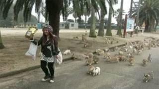 Video για πολύ γέλιο: Κουνέλια πήραν στο κυνήγι τουρίστρια