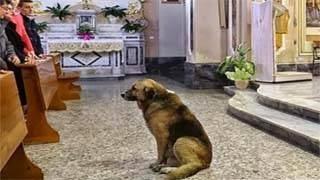 Ο σκύλος που πηγαίνει κάθε μέρα στην Εκκλησία – Ο λόγος θα ραγίσει την καρδία σας
