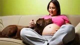 Δείτε τι κάνει ο σκύλος μόλις νιώσει πως απειλείτε η έγκυος ιδιοκτήτρια του