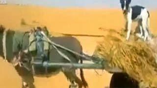 Σκύλος οδηγεί άμαξα – Ξεκαρδιστικό video