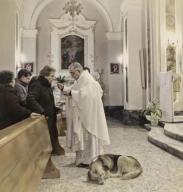 σκύλος σε εκκλησία