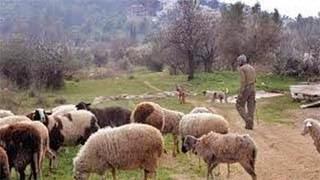 Σοκ! Αυστραλός αγρότης έχανε τα πρόβατα του και δείτε τι διαπίστωσε!