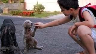 εγκαταλελειμμένα σκυλάκια