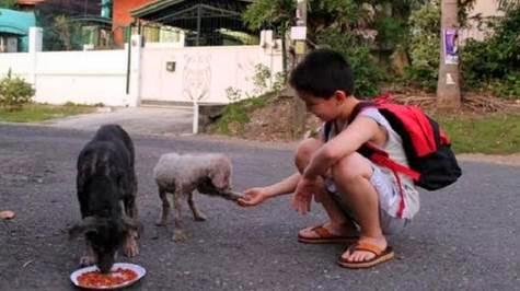 καταφύγιο για τα αδέσποτα ζώα.