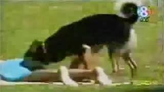 Σαρώνει ο σκύλος που πειράζει τις γυναίκες (video)