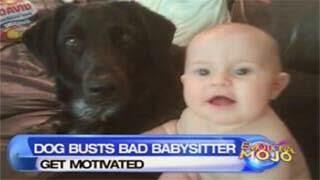Σκύλος ειδοποίησε τους γονείς πως η μπέιμπι σίτερ
