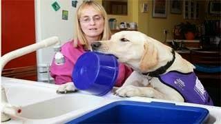 Ο σκύλος που εξυπηρετεί κάθε ανάγκη του αφεντικού του (pics)