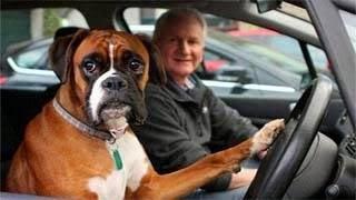 Video – Ο σκύλος που κορνάρει στο αφεντικό του γιατί αυτός… αργεί