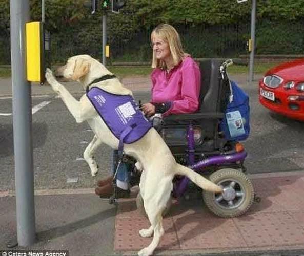 σκύλος να βοηθάει 1