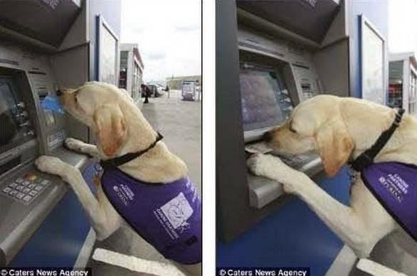 σκύλος να βοηθάει 2