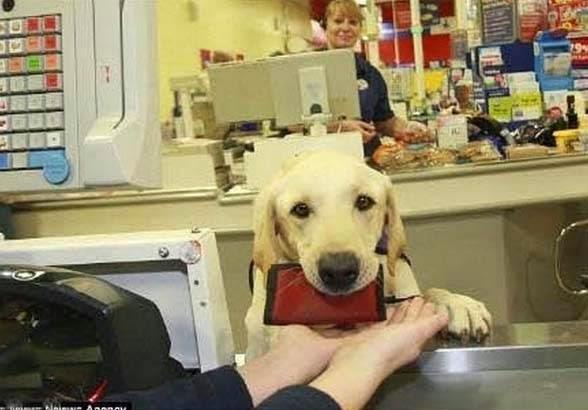 σκύλος να βοηθάει 3